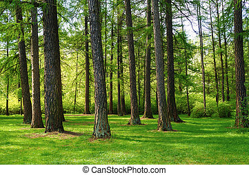 Bright green natural spring landscape with trees in the Park