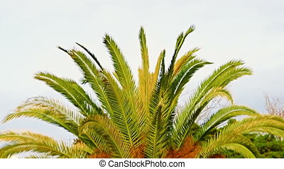 Bright green palm leaves are waving in the slight breeze on a sunny summer day.