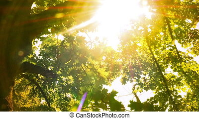 Bright Green Tree Leaves Glisten In The Sunlight