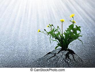 Bright Hope of Life - Plants emerge though asphalt, symbol...