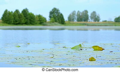 Bright landscape: blue water and green vegetation on the water on a summer morning