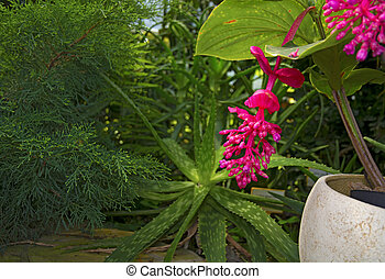 bright large pink flower. hanging juicy and colorful flower