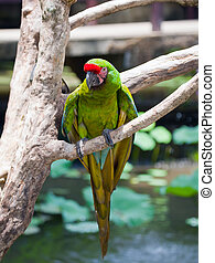 bright large tropical parrot