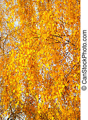 Bright leaves on a tree