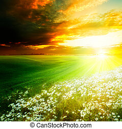 Bright light morning on the green hills. Abstract natural backgrounds