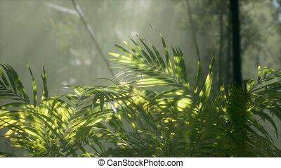 bright light shining through the humid misty fog and jungle ...