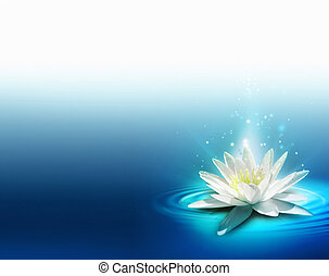 bright lily on the water surface