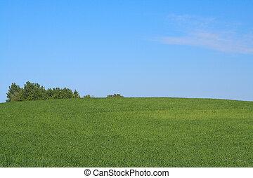 bright meadow #3