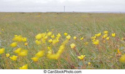 Bright meadow among tundra of Novaya Zemlya archipelago -...