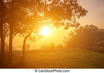 Bright misty morning in the mountains with oak trees in the fore