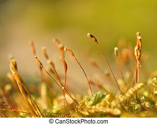 Bright moss macro shot in spring