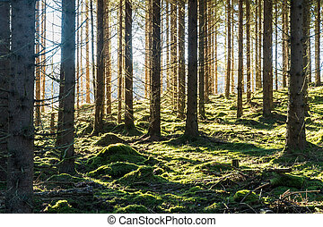 Bright mossy forest