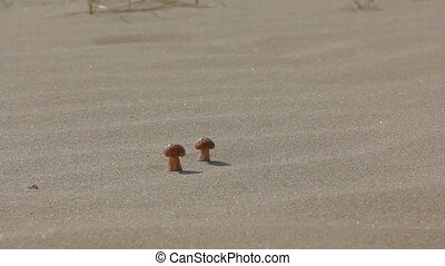Bright mushrooms grow on dunes sand
