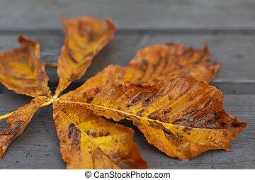 Bright orange autumn horse chestnut leaf on grey surface -...