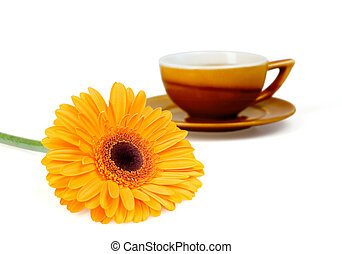 Bright orange flower and cup of tea on a white background