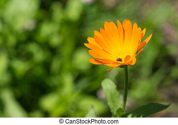 Bright orange flower in a summer garden