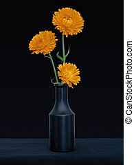 Bright orange marigold flowers, Calendula officinalis, against deep blue background. Edible medicinal herb. Still life in dark vase.