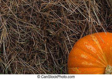 orange pumpkin on a background of hay