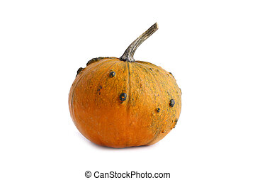 Bright orange pumpkin on white background with copy space