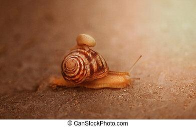 Bright photo of a macro snail