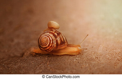 Bright photo of a macro snail