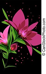 Bright pink flower on black background