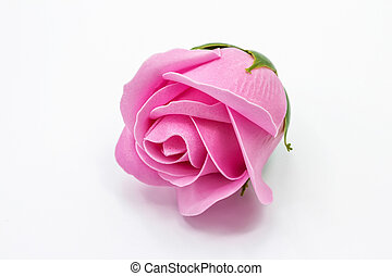 Bright pink rose flower on white background