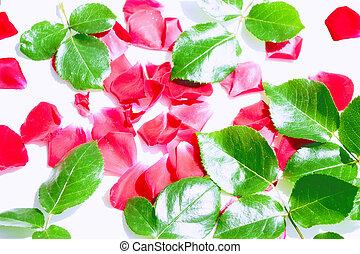 Bright pink rose petals. floral background.