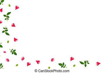 Bright pink rose petals.