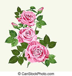 Bright pink roses on pale green background