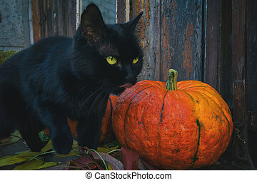 Bright pumpkins and black cat are ready for Halloween