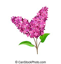 Bright purple lilac. Vector illustration on a white background.