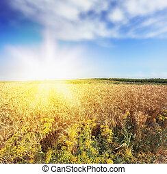 Bright rays of sunlight