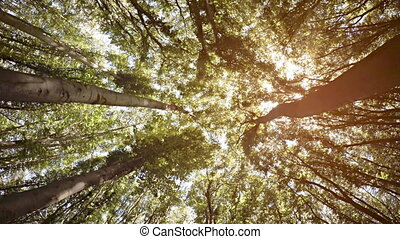 Bright Rays of Sunshine Filter through Forest Canopy. Video...