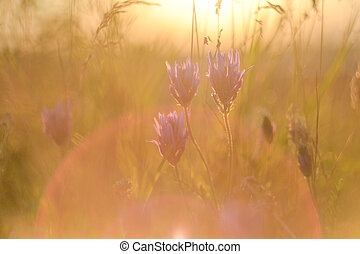 Bright rays of the setting sun on the background of blurred meadow flowers with bright artifacts. The concept of nature, ECO, rural life