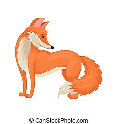Bright red fox standing isolated on white background, side view. Wild forest animal with fluffy tail. Flat vector icon