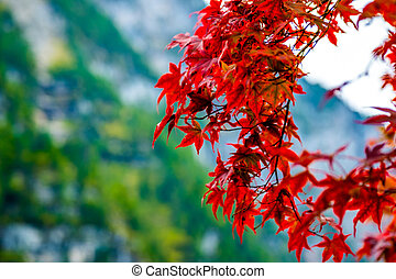 Bright red leaves on the branches