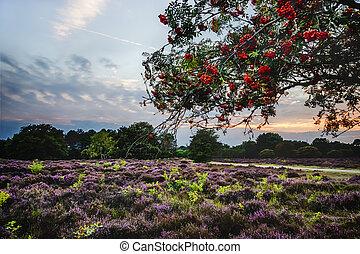 Bright rowan berries on a tree
