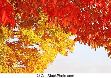 Bright scarlet red Maple leaves hang in the foreground creating a beautiful border. Golden yellow Maple leaves in background