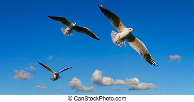 bright sky panorama with seagulls, focus is set on the middle seagull