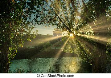 Bright Sun Beams Shining Through Trees. Magestic autumn ...