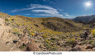 Bright Sun Burst Above Desert Bloom