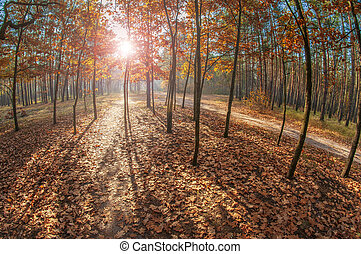 Bright sun in the autumn forest.