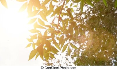 Leaves of tree in sunny day slow motion.