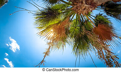 Bright sun light shining through palm tree against blue sky