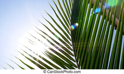 Bright Sun Light Through Exotic Foliage of Palm Leaf.