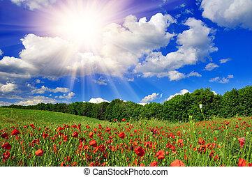 Bright sun over poppy field