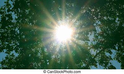 bright sun shines through foliage