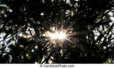 bright sun shines through tree