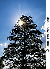 bright sun through a tree
